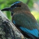 Enjoy a Peaceful Day of Bird Watching for Relaxing Exploration